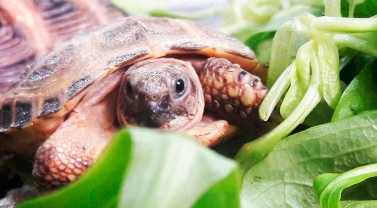 S'acosta la tardor…  les tortugues ho noten